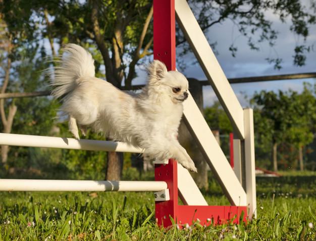 reforço positivo no adestramento de cães